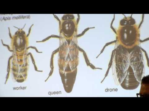 Amazing Design of Bees