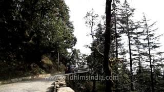 Landour-Dehradun road