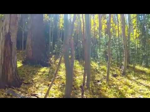Autumn in the Coconino National Forest