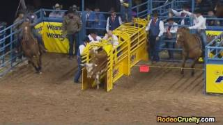 Horses Electroshocked at the 2016 National Finals Rodeo