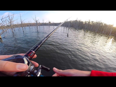 Fishing In a Flooded Forest