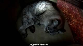 Тайная жизнь домашних животных. Реальная и Тайная жизнь домашних котов. Сны и фантазии котов