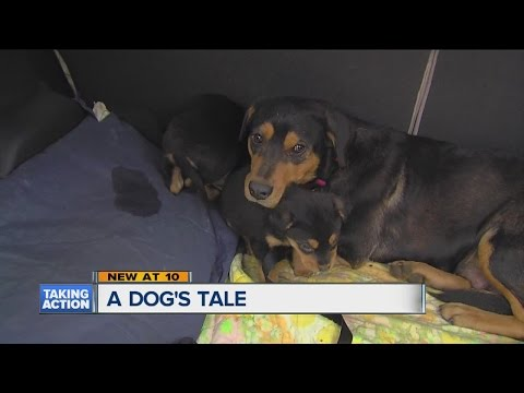 Mother reunited with puppies
