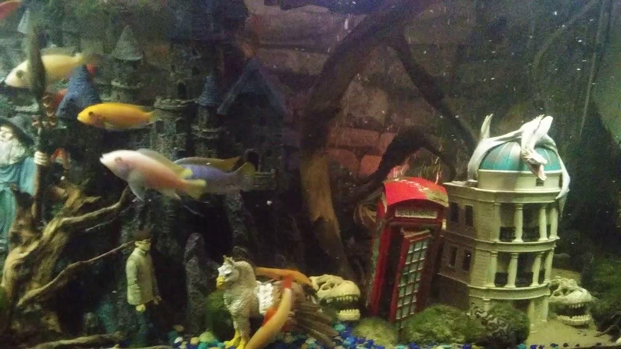 Aquarium Decorations Ideas Harry