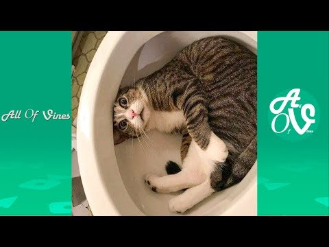 Try Not To Laugh Watching Funny Animals Compilation | Funnie