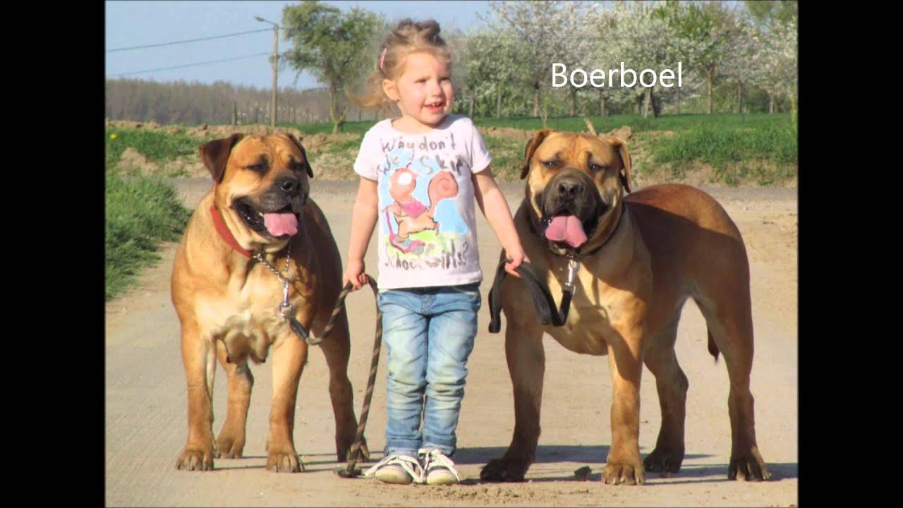 Skolevalg 2015 - Gør de 13 ulovlige hunderacer lovlige