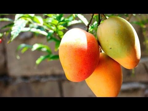Calorias del jugo de mango
