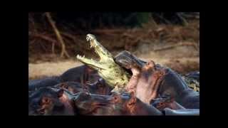 Крокодилы - презентация к уроку биологии.wmv