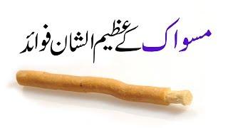 Miswak | Documentary | A Great Sunnah | Madani Channel | Islamic Way