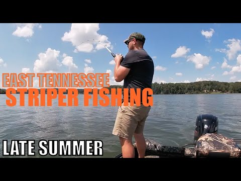 WATTS BAR LAKE: Late Summer Striper Fishing