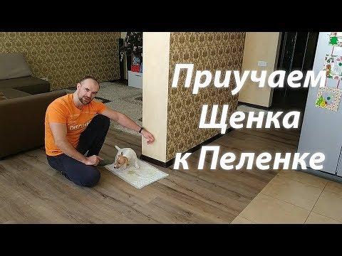 ПРИУЧАЕМ СОБАКУ К ТУАЛЕТУ, С РЕЗУЛЬТАТОМ ;)