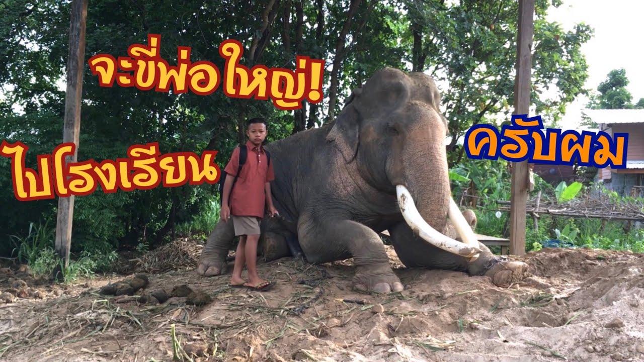 เปิดเทอม❗️ใหม่…ขี่ช้างพ่อใหญ่! ไปโรงเรียน