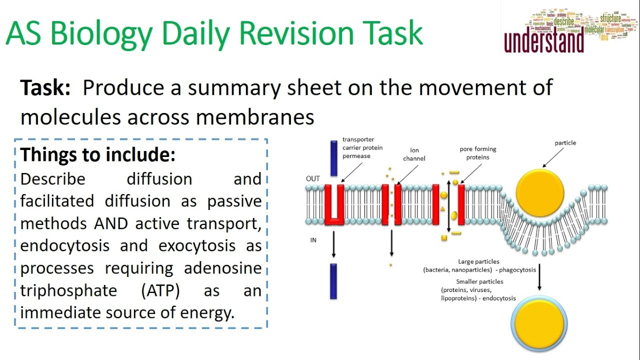 AS Biology Daily Revision Task 46:  Movement Across Membranes - YouTube