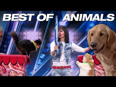 Singing Dogs! Cat Tricks! Animal Noises From A Human! – America's Got Talent 2018