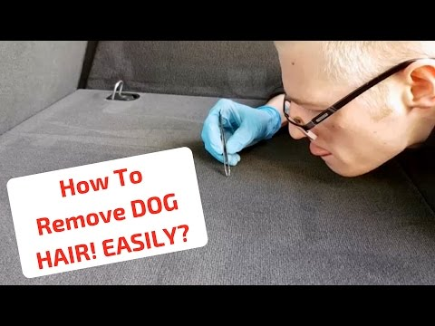 No More HAIR... My PET Hate! How To Remove Dog Hair EASILY...