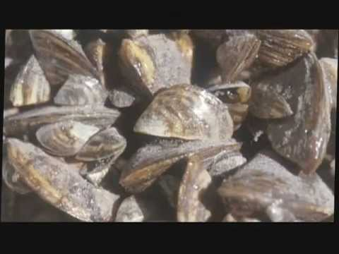 Silent Invaders Season 1: Intro to Zebra & Quagga Mussels