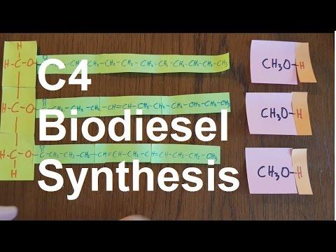 C4 Biodiesel Synthesis [SL IB Chemistry]