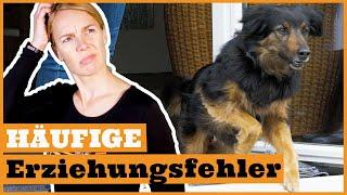 3 häufige Fehler in der Hundeerziehung vermeiden I Gründe warum das Hundetraining nicht funktioniert