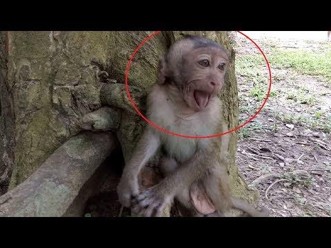 Baby Monkey Cry Loudly ST714 Mono Monkey