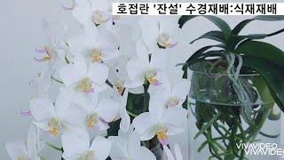 호접란 '잔설' 수경재…