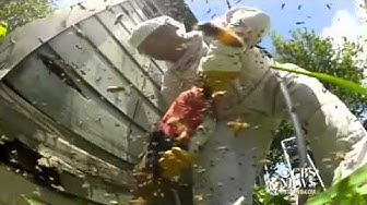 "Pest control battles beehive from ""Hell"""