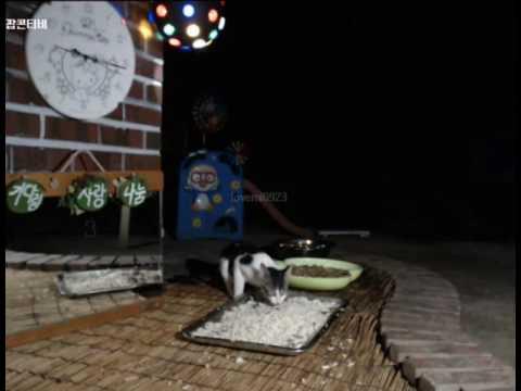 Cats Meok Bang : Stray Cats in South Korea [팝콘티비 BJ도둑고양이 나비월드] 160820 난닝이 오후9시15