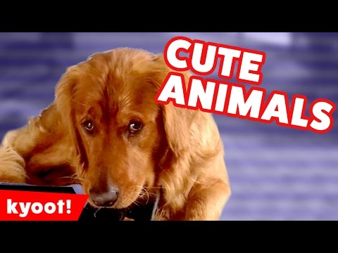 Funniest Cute Pet & Animal Home Video Bloopers Caught On Tape Weekly Compilation | Kyoot Animals
