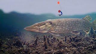 Рыбалка на Жерлицы с Подводными камерами Много Щуки Подводная съемка