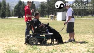 Dog Obedience Class Medford Oregon: Zito Dumbbell Retreive