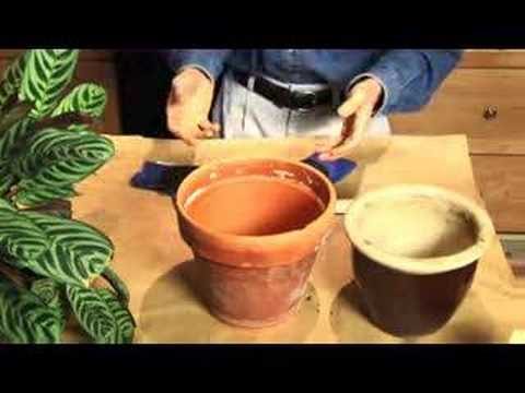 How To Repot A Houseplant YouTube