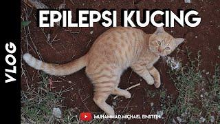 Kucing Epilepsi Sawan Babi.