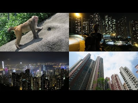 REAL MONKEYS & HONG KONG AT NIGHT! //Hong Kong