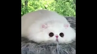 Funny cats #16