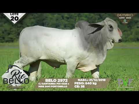 LOTE 20   BELO 2972
