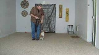 Dog Obedience 11 Week Old Boxer Pup In Training  -  Cincinnati Master Trainer