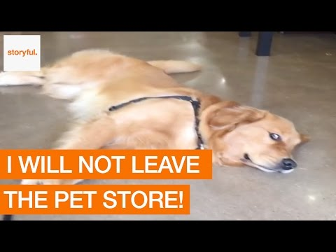 This adorable dog refused to leave the pet store and we can totally relate to his struggle