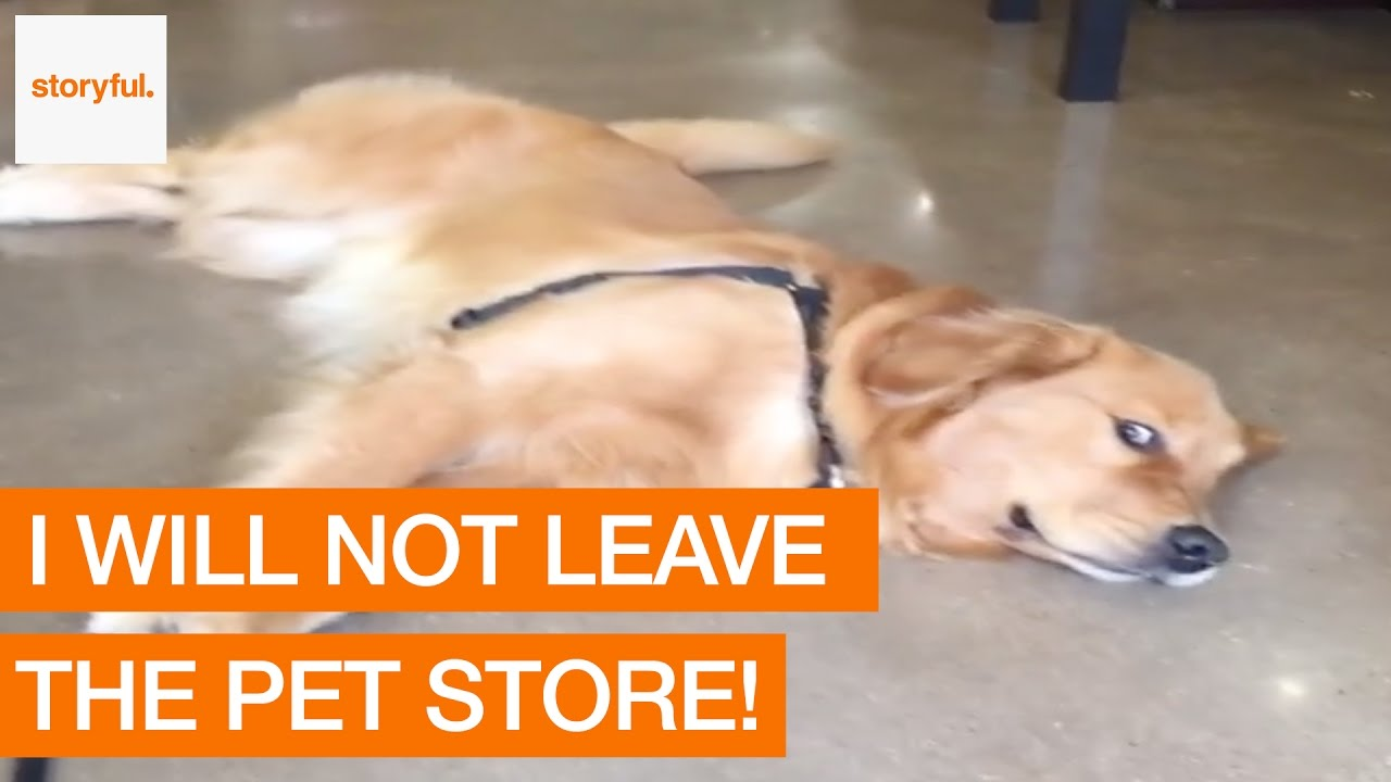 When Your Dog Doesnt Want To Leave The Pet Store YouTube - Dog learns to play dead so he doesnt have to leave the park
