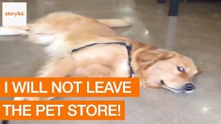 When your Dog Doesn't Want to Leave the Pet Store