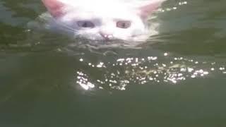 Кошка плавает в озере!