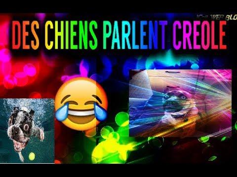 Parodie chiens qui parlent creole en langue haïtienne ou Guadeloupenne