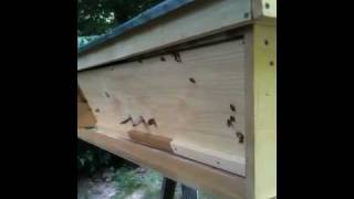 Completed First Kenyan Top Bar Bee Hive ( Ktbh ).  Day 3