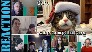 Funny Cats Vine Compilation September 2015 REACTIONS MASHUP
