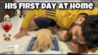 Finally We Met    His First Day At Home     We Slept Together    His First Meal   Labrador Love