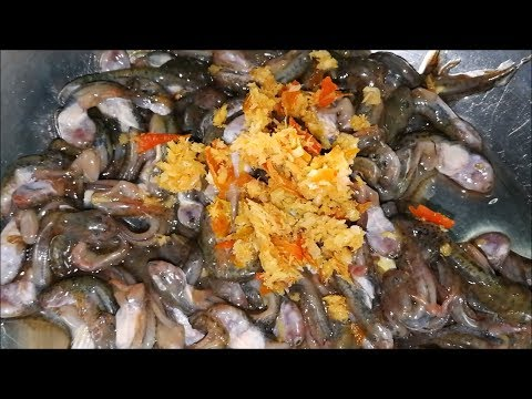 Amazing food of frog ( Thai food recipes ) – Asian food at home