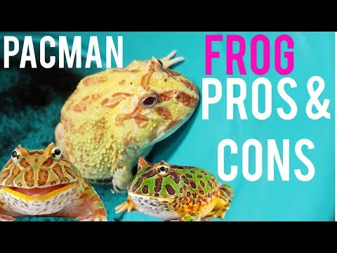 Things To Know Before Getting A Pacman Frog