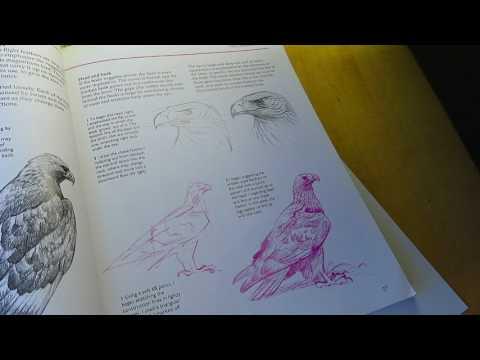 Pencil sketch accidental asmr