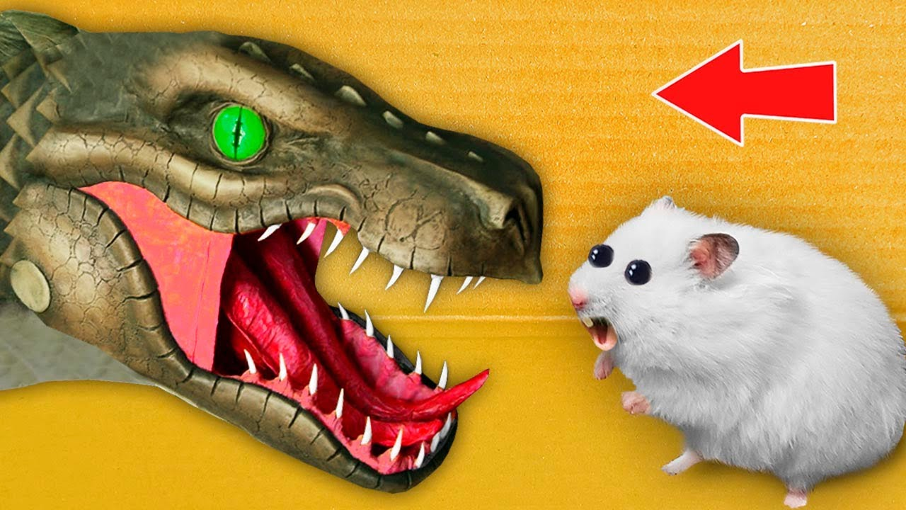 🐲 DRAGO - Hamster Maze with Traps ☠️ [OBSTACLE COURSE]