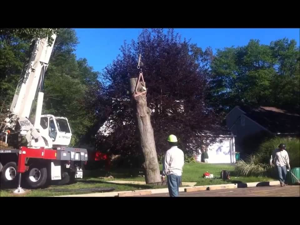 Tree Removal by Monster Tree Service