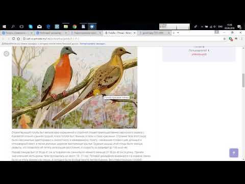 Как создать бесплатный сайт на Ucoz? Пошаговая инструкция #2