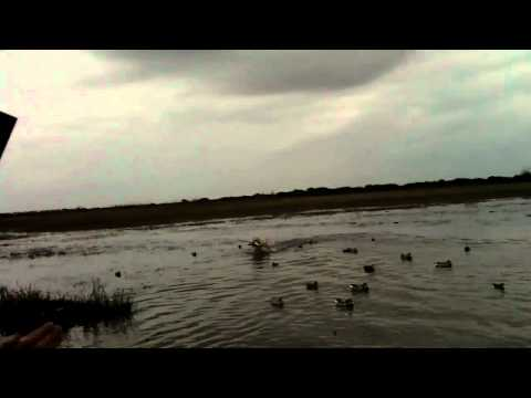 Eagle Lake Duck Hunting